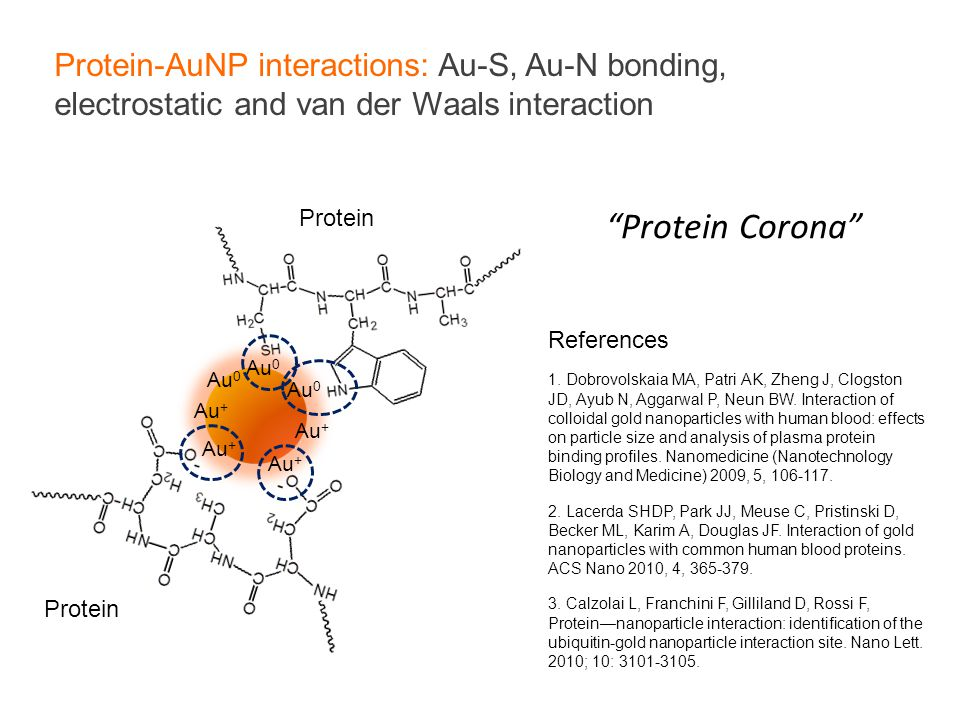Protein-AuNP interactions: Au-S, Au-N bonding, electrostatic and van der Waals interaction