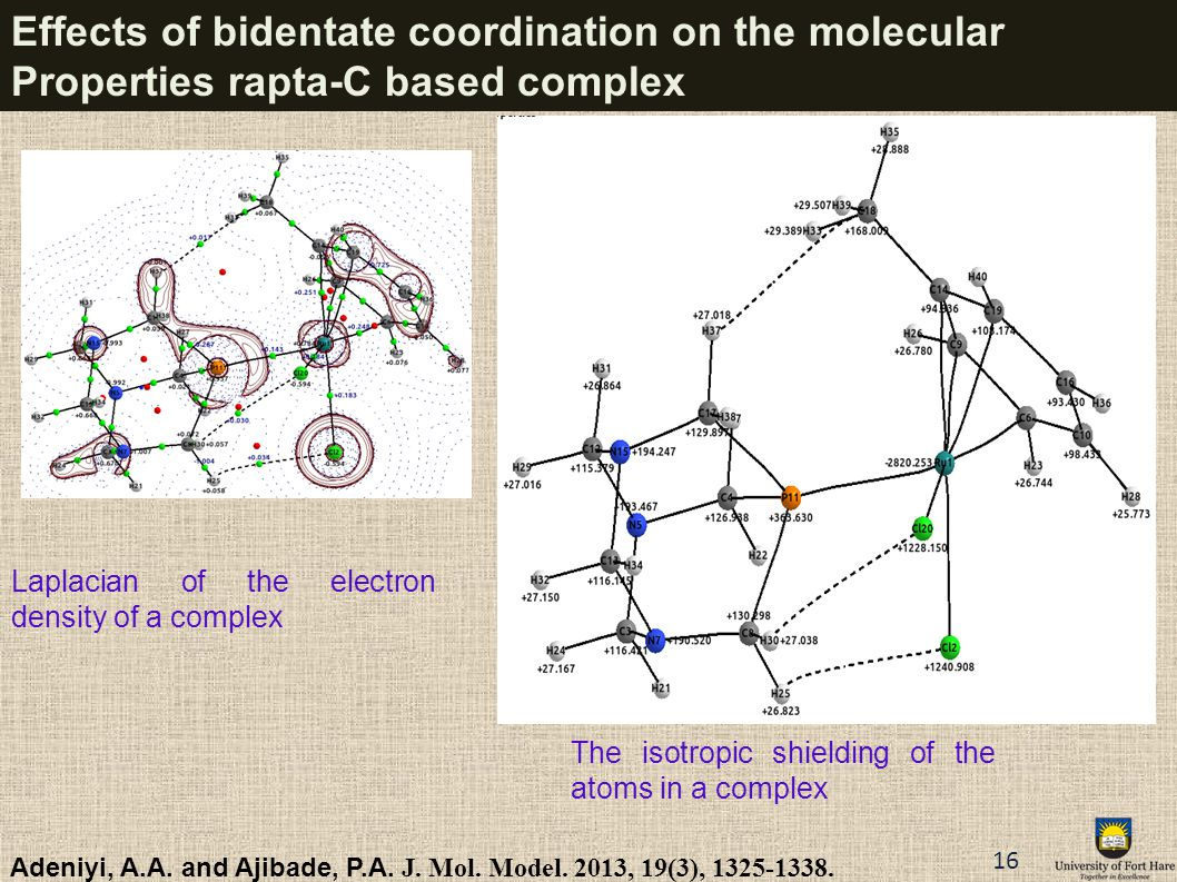 Effects of bidentate coordination on the molecular