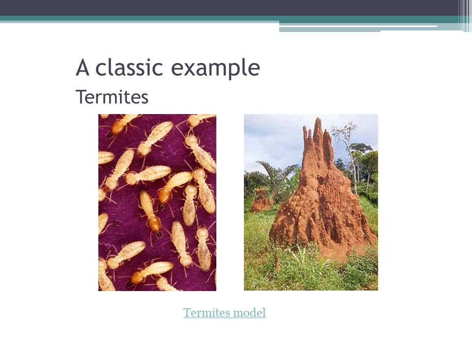 A classic example Termites