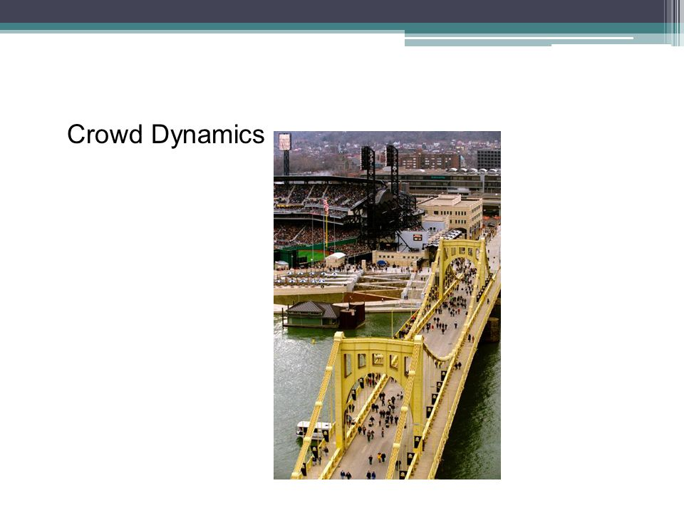 Crowd Dynamics