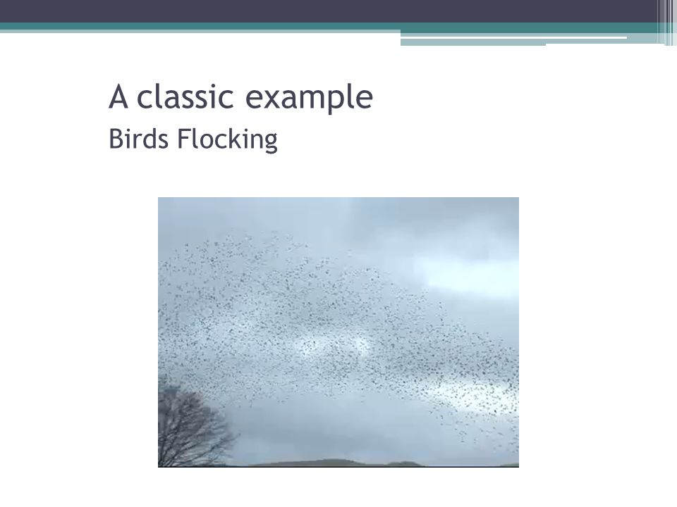 A classic example Birds Flocking