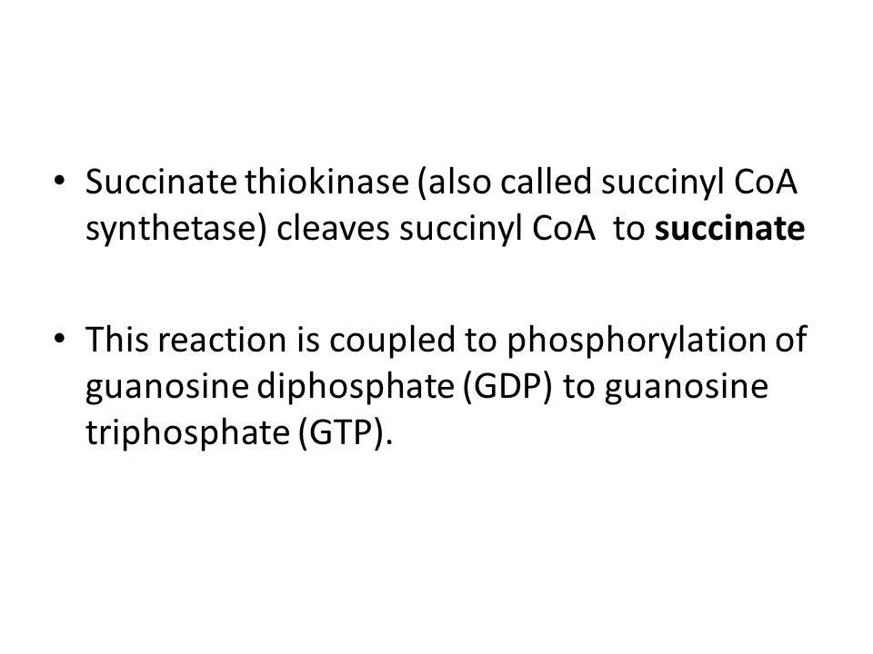 Succinate thiokinase (also called succinyl CoA synthetase) cleaves succinyl CoA to succinate
