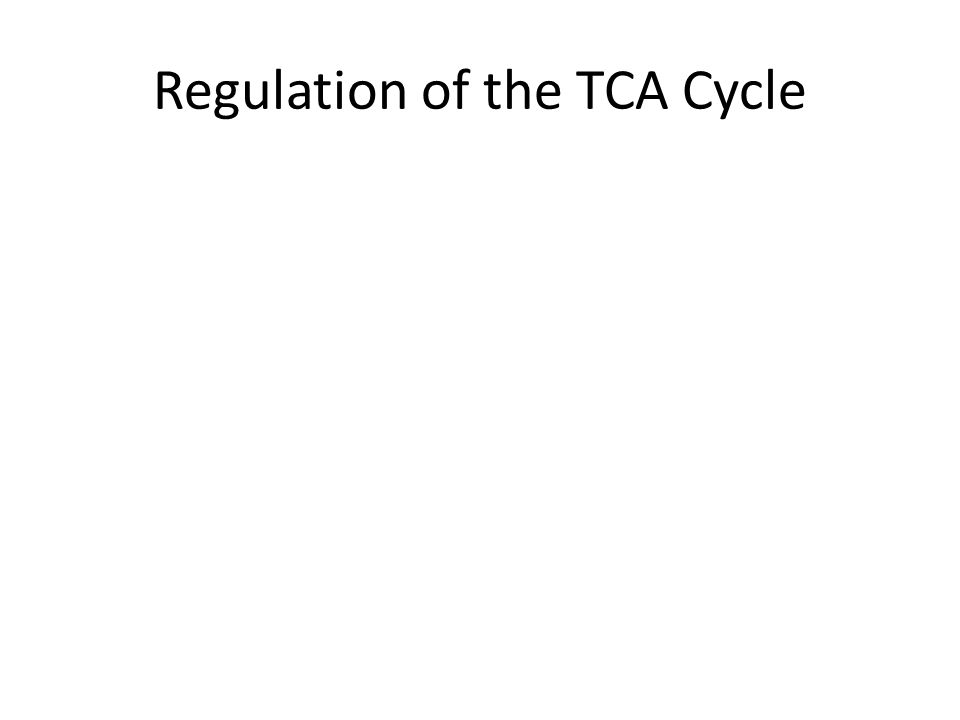 Regulation of the TCA Cycle