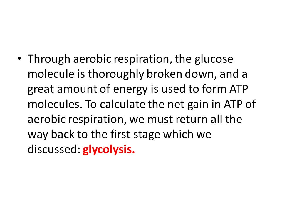 Through aerobic respiration, the glucose molecule is thoroughly broken down, and a great amount of energy is used to form ATP molecules.