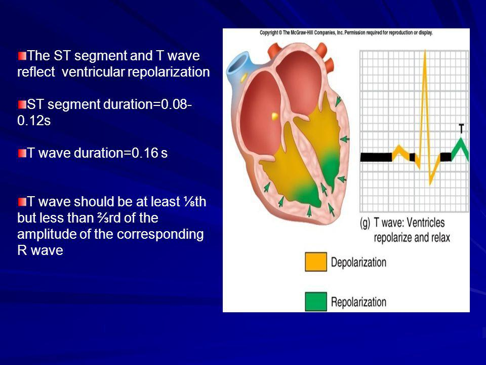 The ST segment and T wave reflect ventricular repolarization