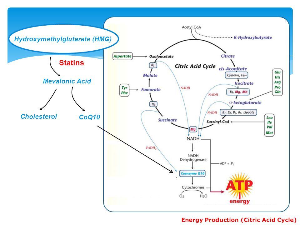 Statins Hydroxymethylglutarate (HMG) Mevalonic Acid Cholesterol CoQ10