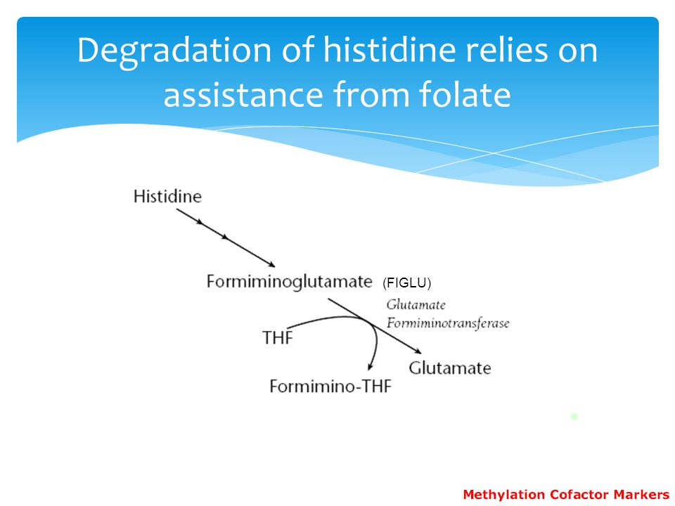 Degradation of histidine relies on assistance from folate
