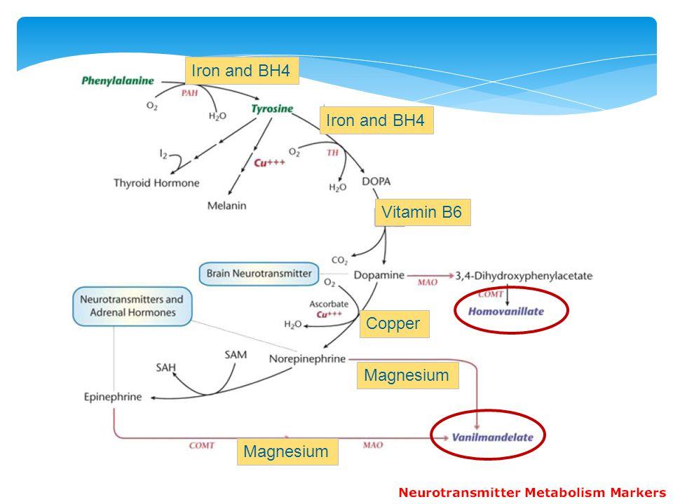 Iron and BH4 Iron and BH4 Vitamin B6 Copper Magnesium Magnesium