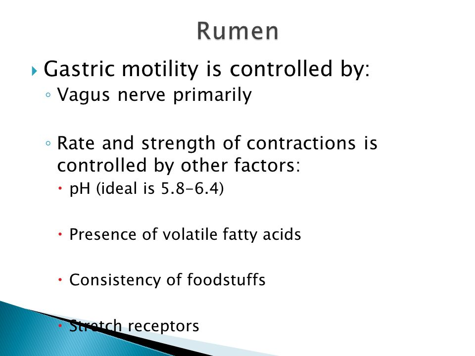 Rumen Gastric motility is controlled by: Vagus nerve primarily