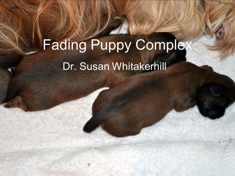 Fading Puppy Complex Dr. Susan Whitakerhill