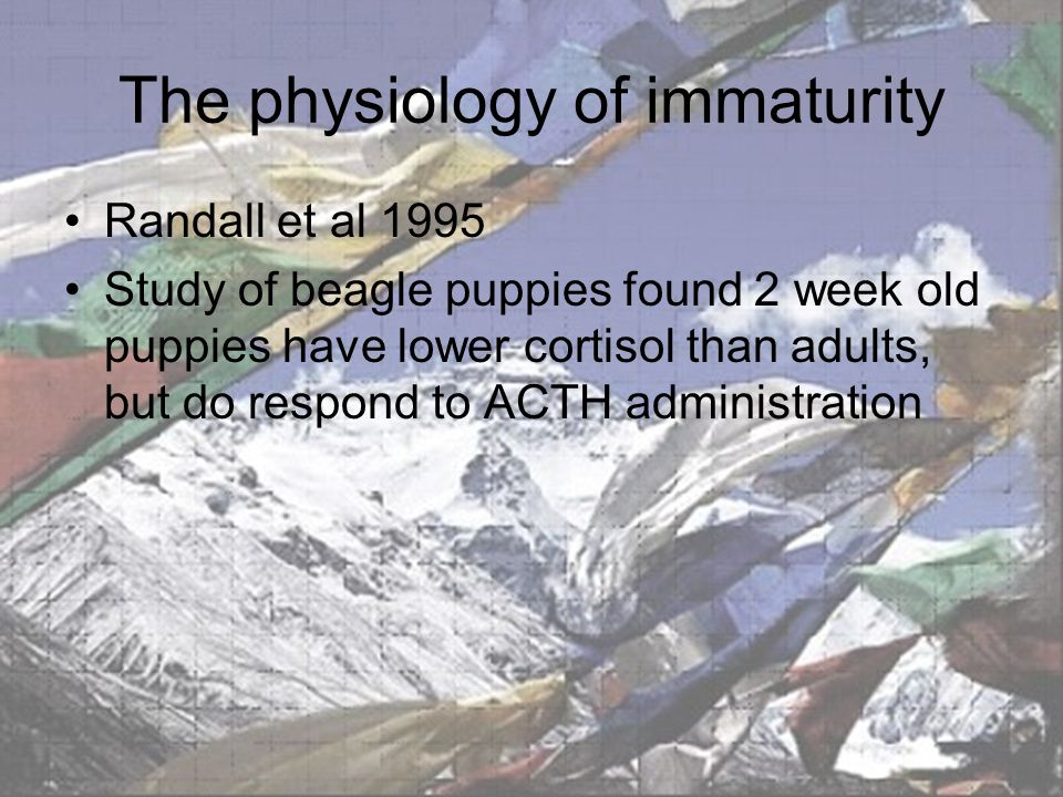 The physiology of immaturity