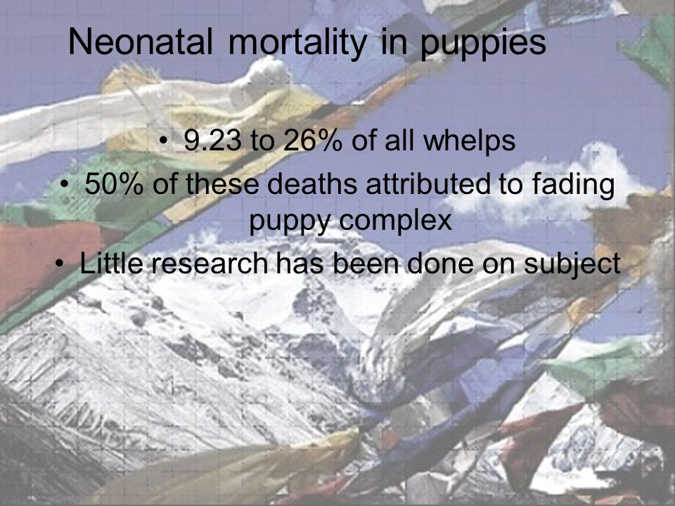 Neonatal mortality in puppies