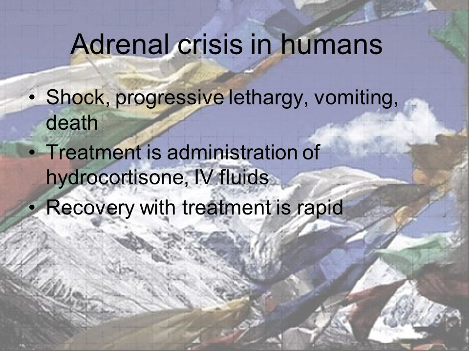 Adrenal crisis in humans