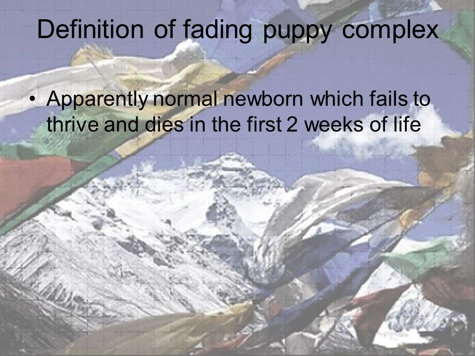 Definition of fading puppy complex