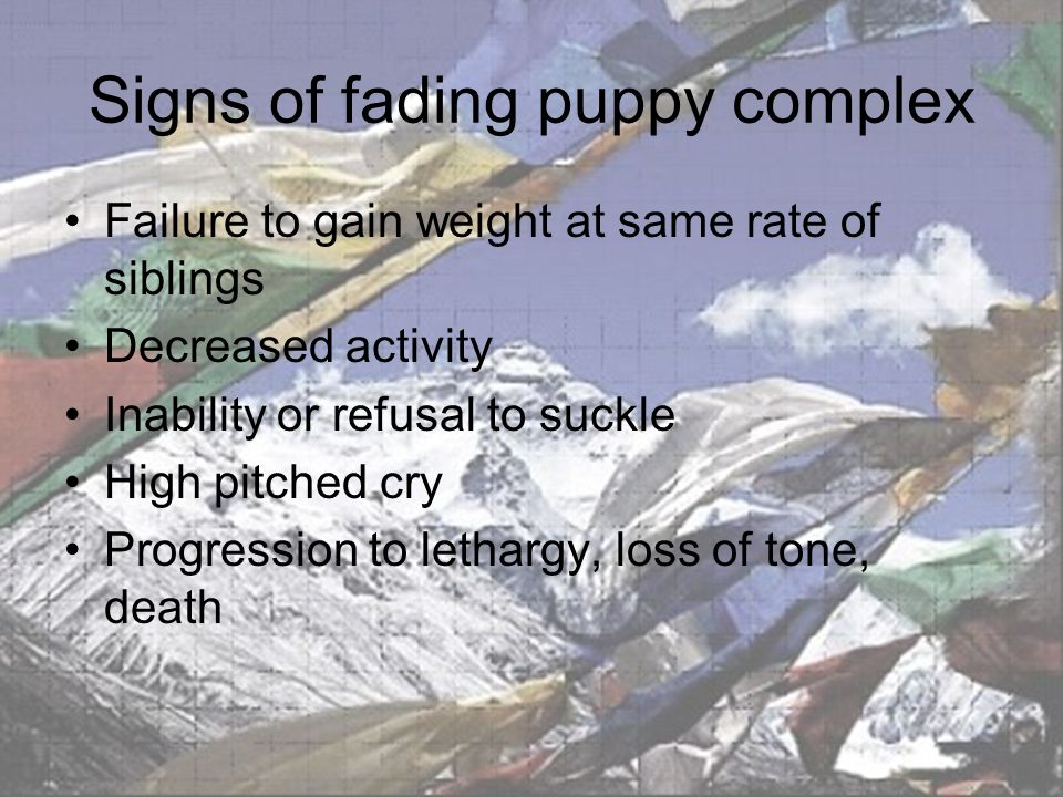 Signs of fading puppy complex