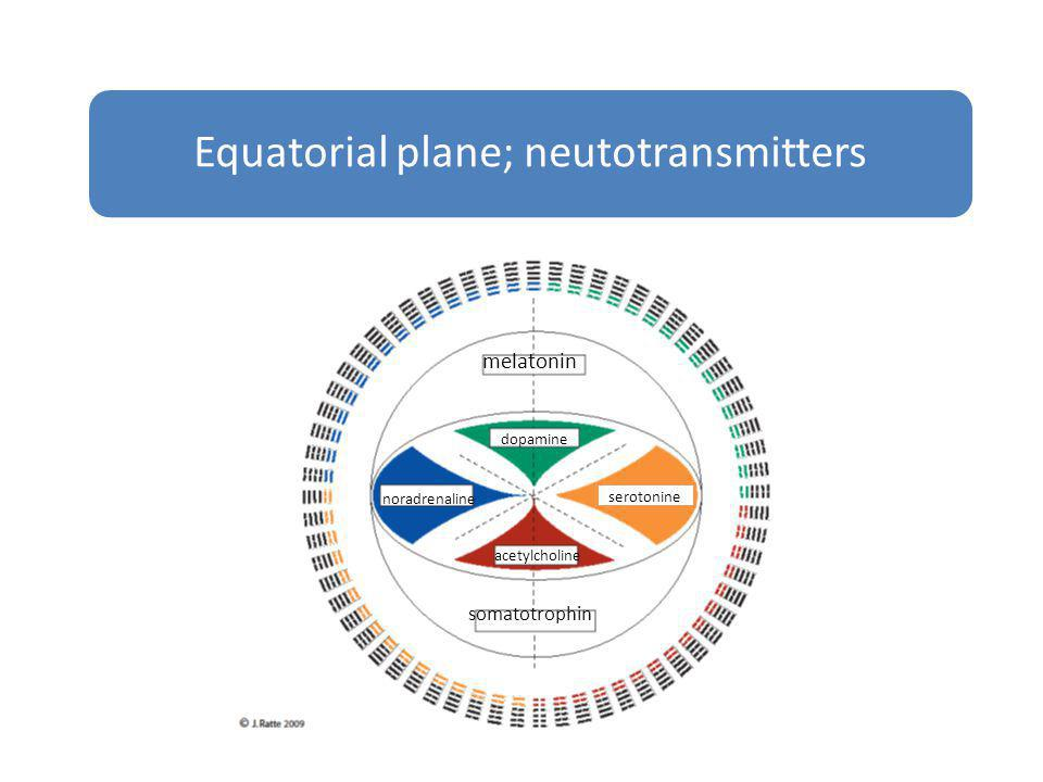 Equatorial plane; neutotransmitters