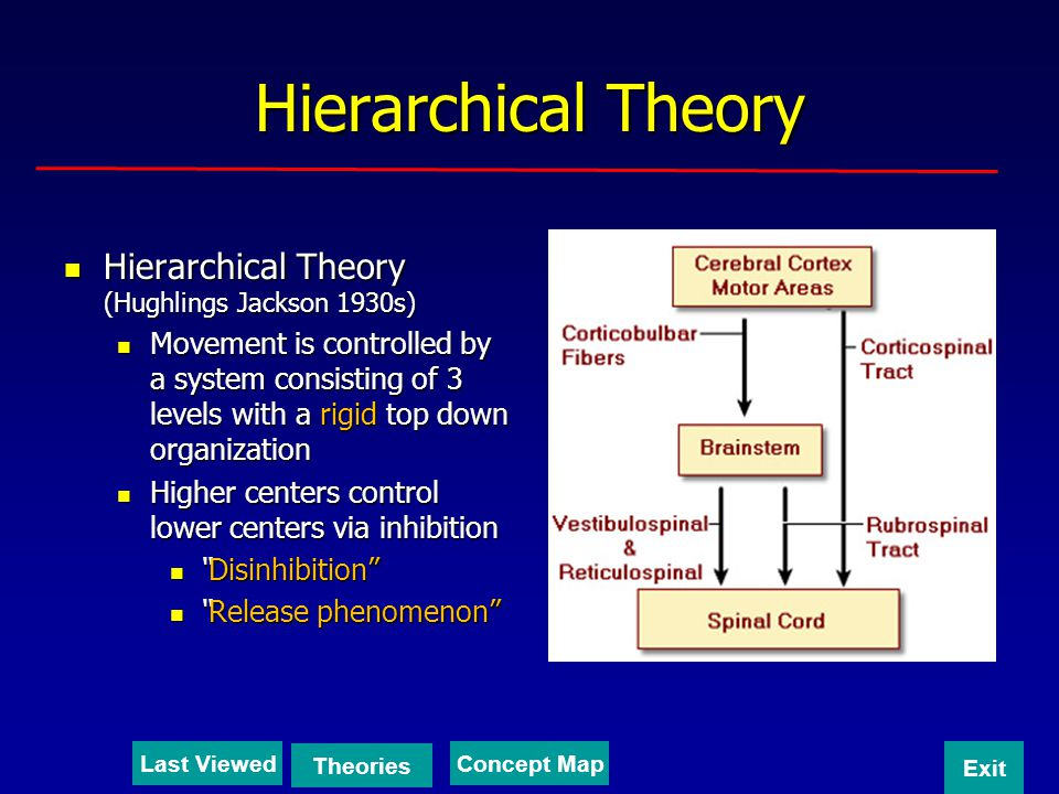 Hierarchical Theory Hierarchical Theory (Hughlings Jackson 1930s)