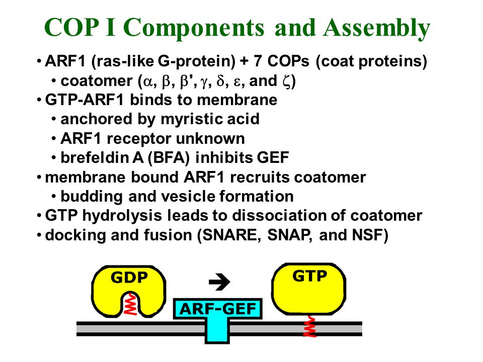COP I Components and Assembly