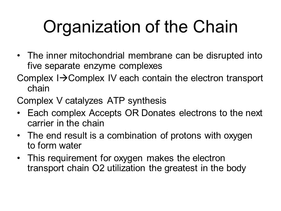Organization of the Chain