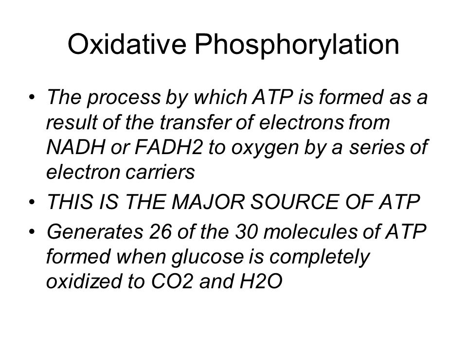 Oxidative Phosphorylation
