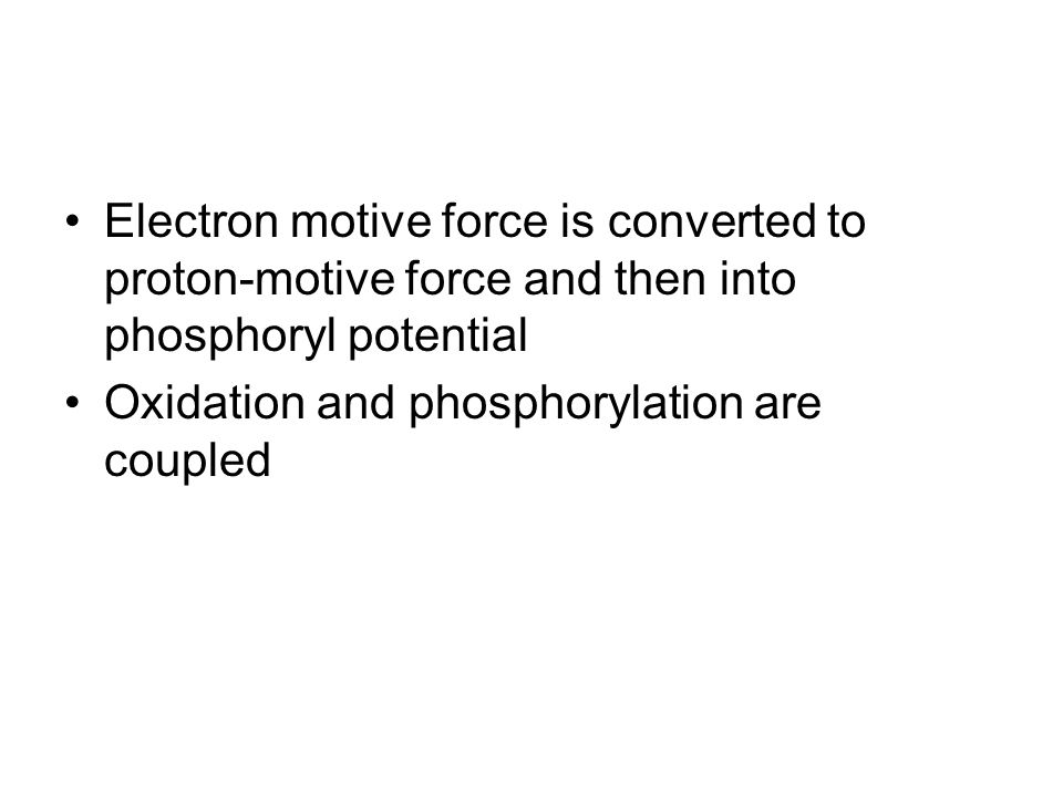 Electron motive force is converted to proton-motive force and then into phosphoryl potential