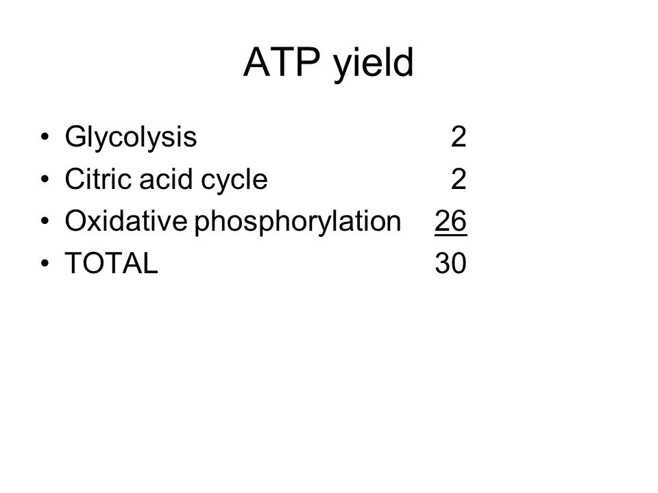 ATP yield Glycolysis 2 Citric acid cycle 2