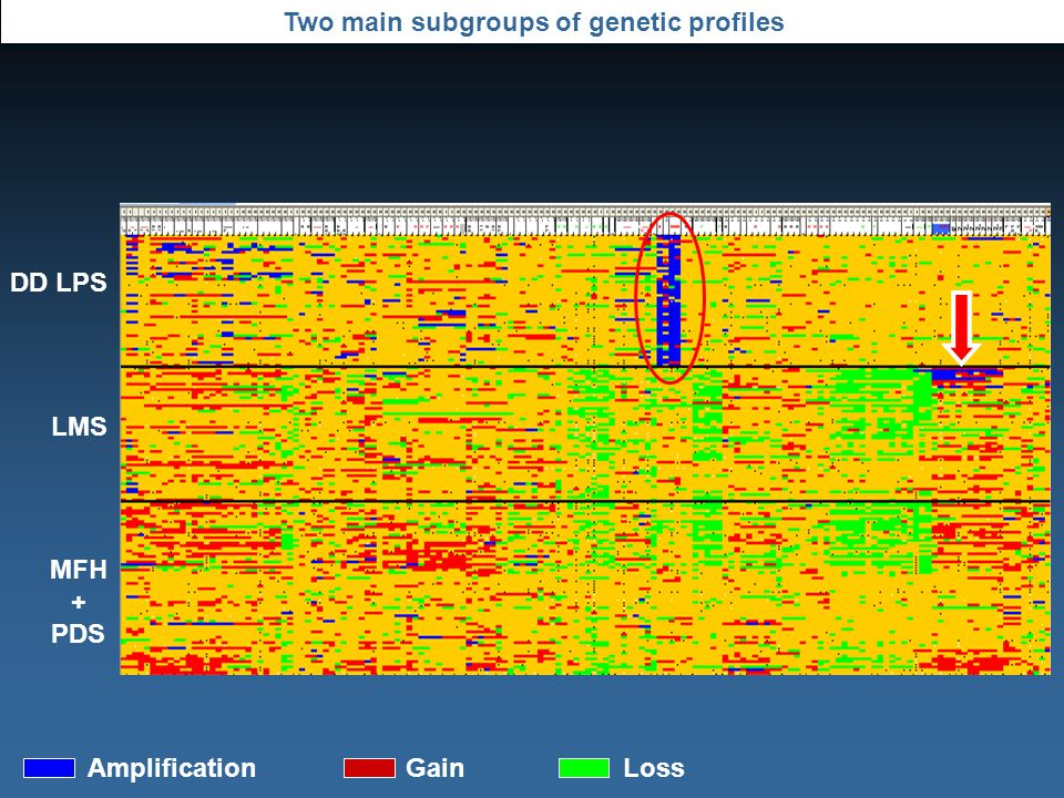 Two main subgroups of genetic profiles