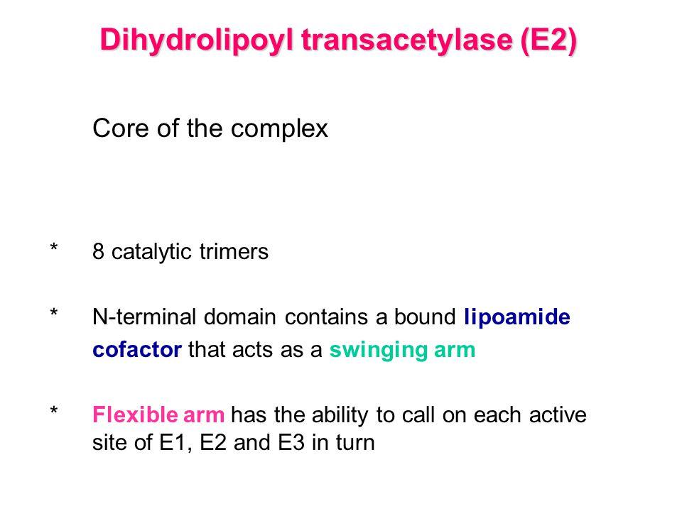 Dihydrolipoyl transacetylase (E2)