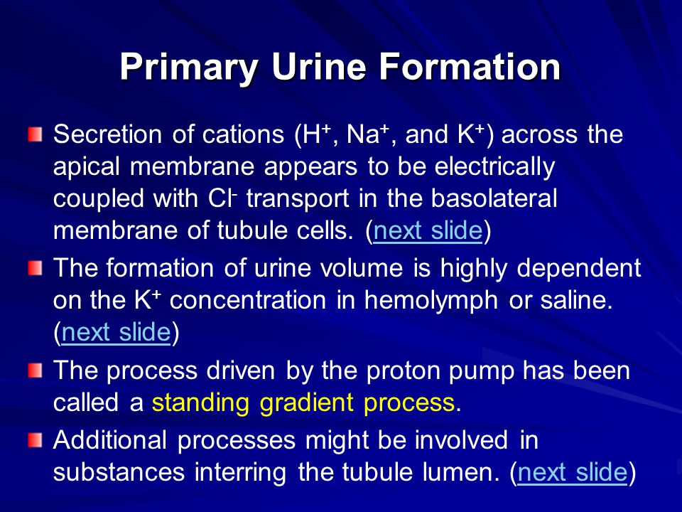 Primary Urine Formation