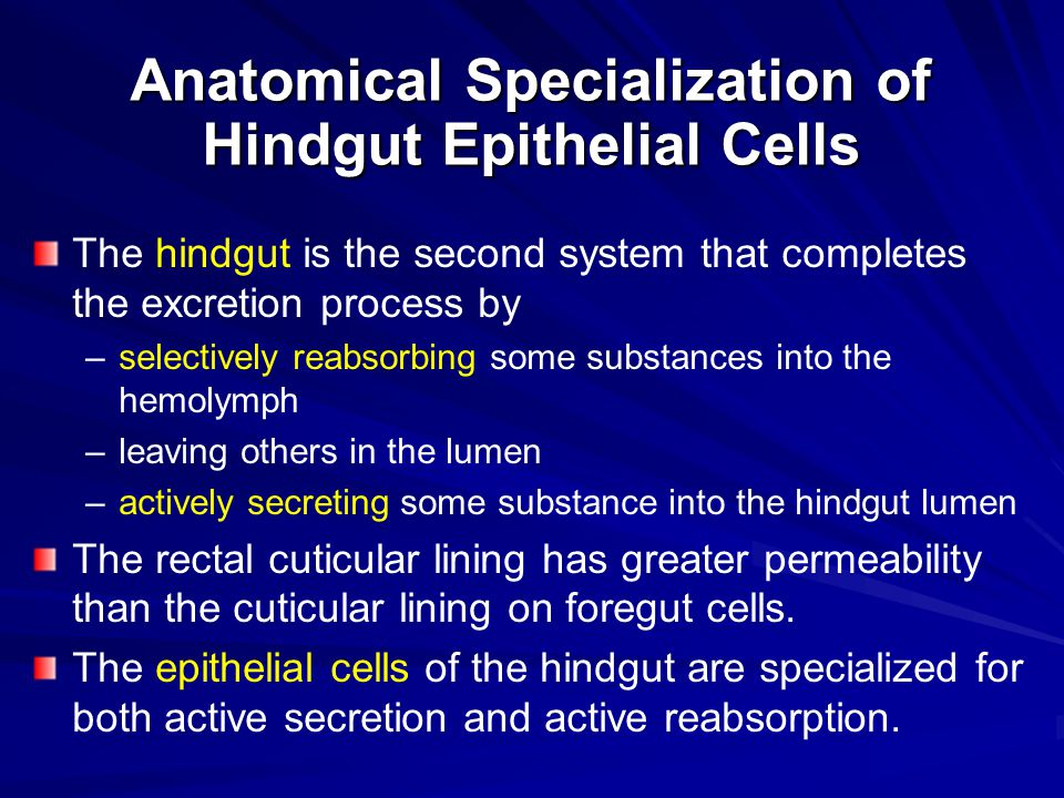 Anatomical Specialization of Hindgut Epithelial Cells