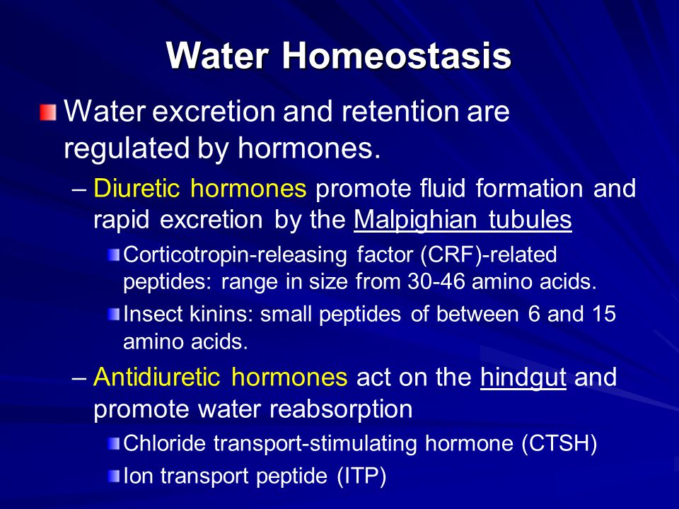Water Homeostasis Water excretion and retention are regulated by hormones.