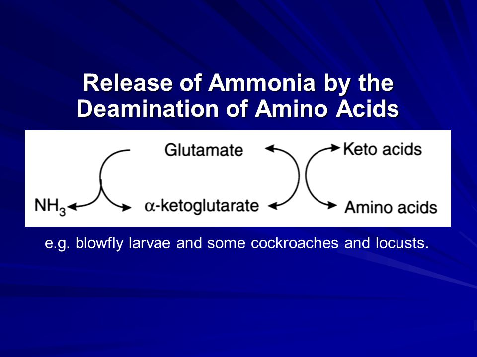 Release of Ammonia by the Deamination of Amino Acids