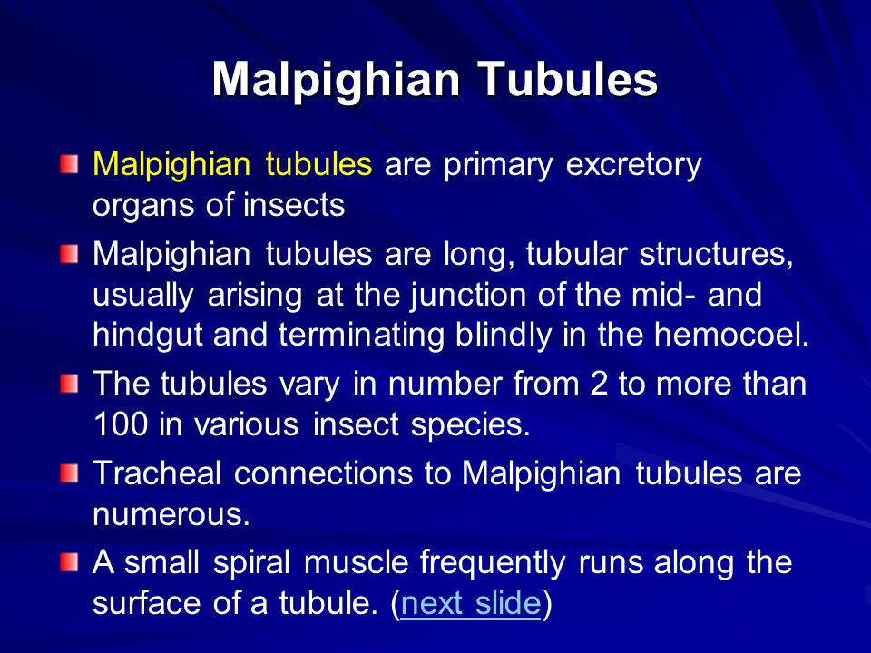 Malpighian Tubules Malpighian tubules are primary excretory organs of insects.