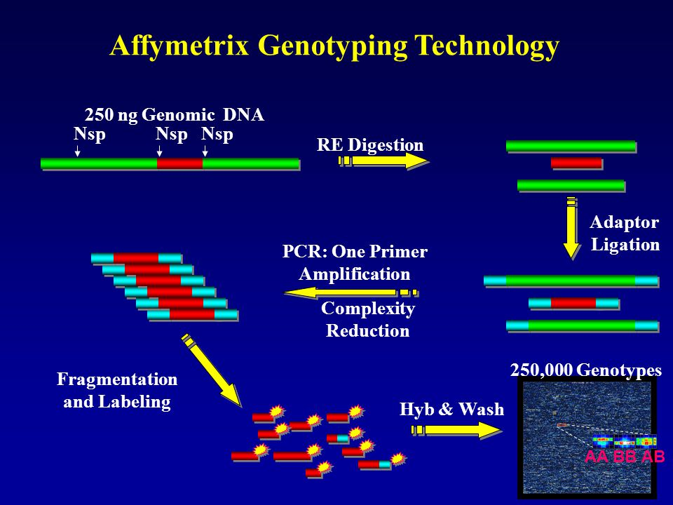 Affymetrix Genotyping Technology