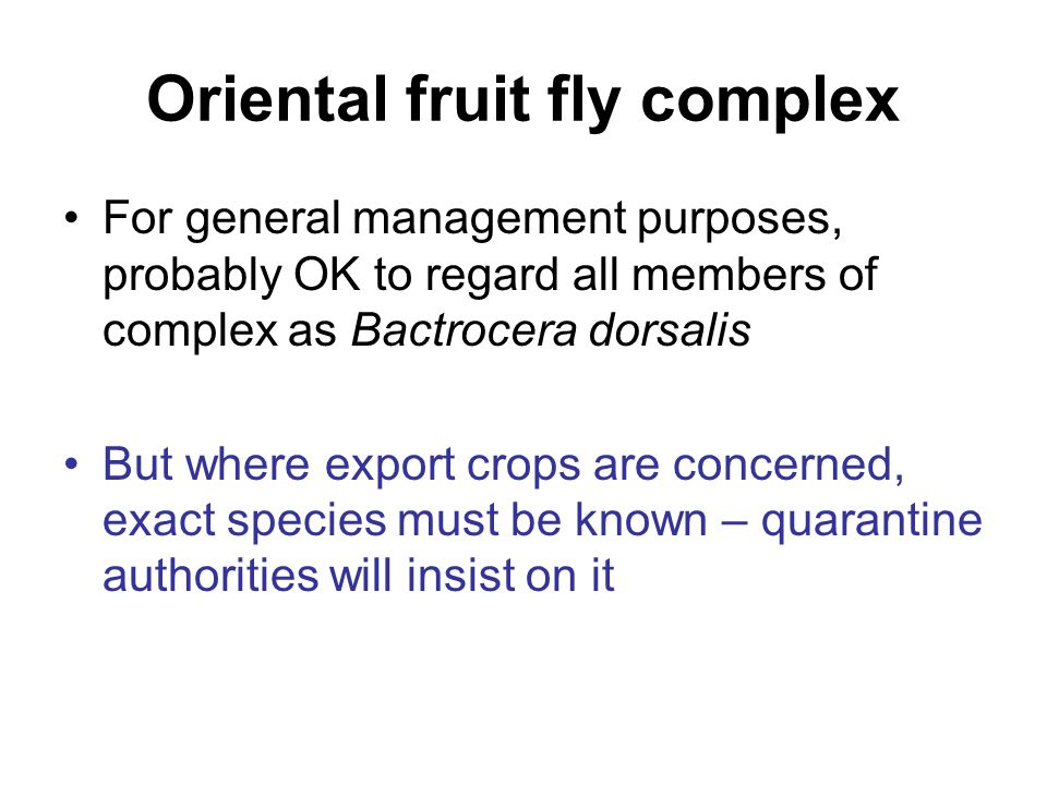 Oriental fruit fly complex