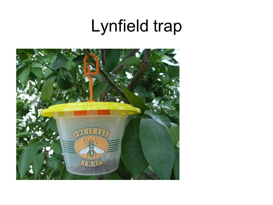 Lynfield trap