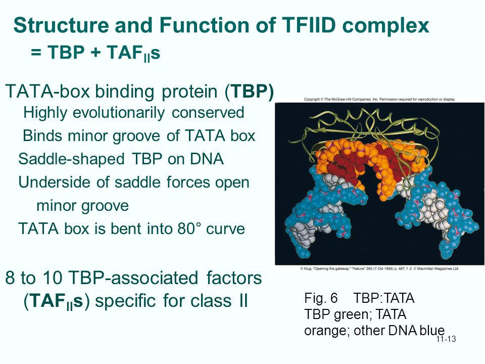 Structure and Function of TFIID complex = TBP + TAFIIs