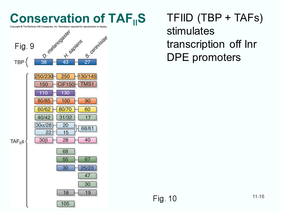 Conservation of TAFIIS