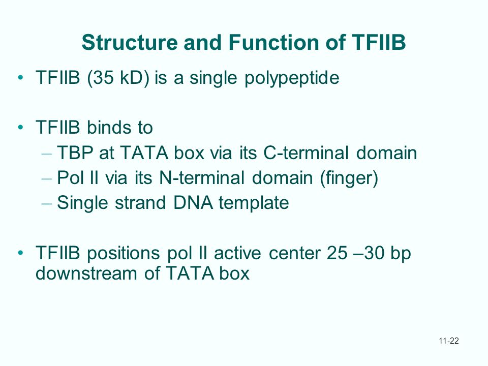 Structure and Function of TFIIB
