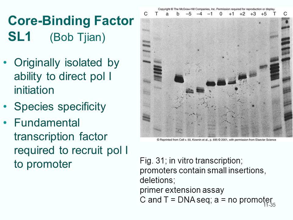 Core-Binding Factor SL1 (Bob Tjian)