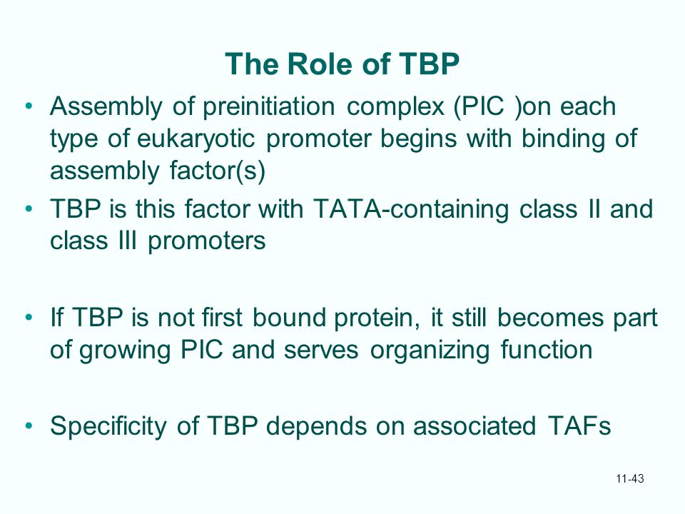 The Role of TBP Assembly of preinitiation complex (PIC )on each type of eukaryotic promoter begins with binding of assembly factor(s)