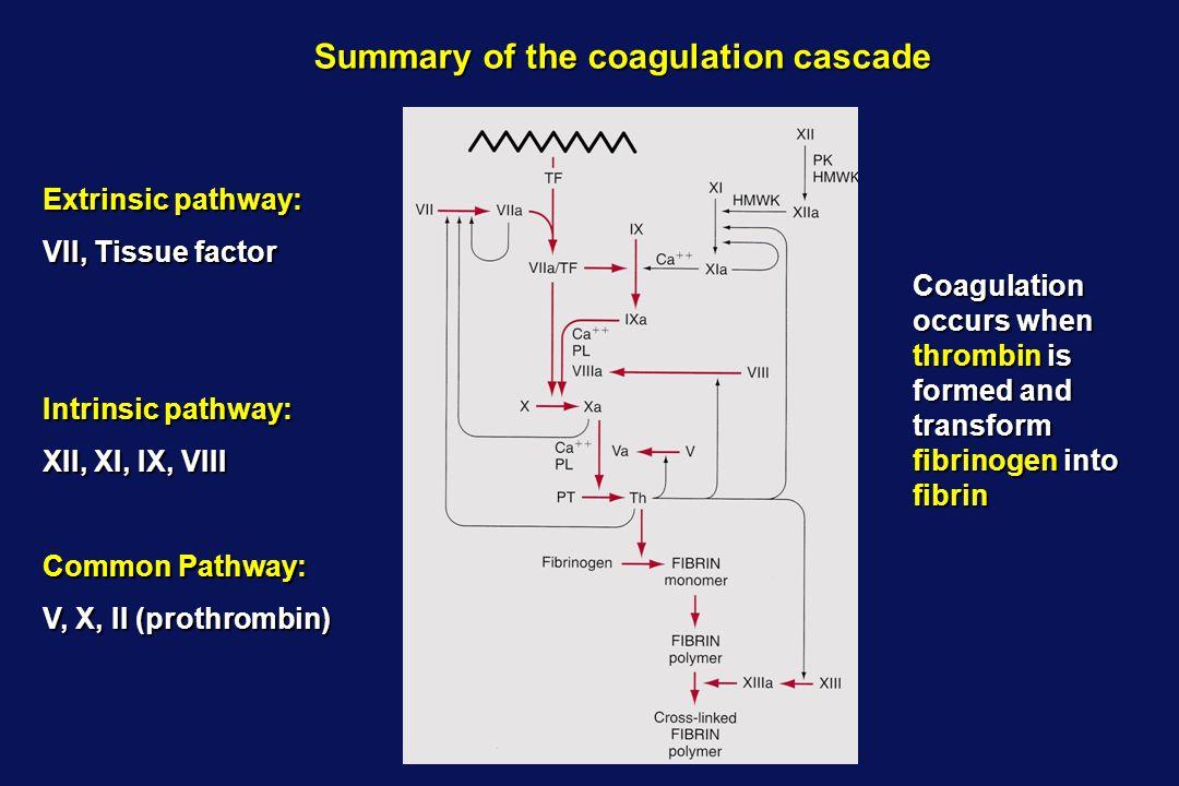 Summary of the coagulation cascade
