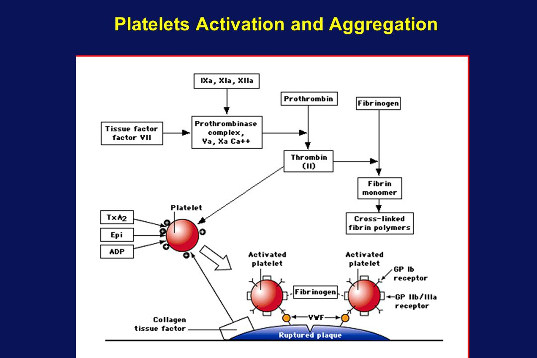 Platelets Activation and Aggregation