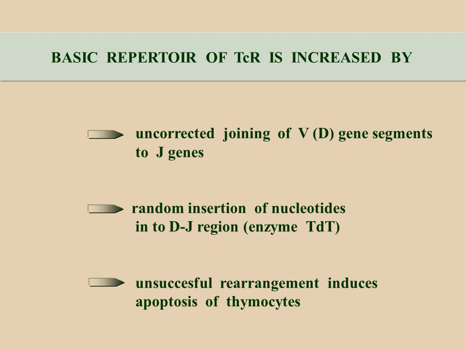 BASIC REPERTOIR OF TcR IS INCREASED BY