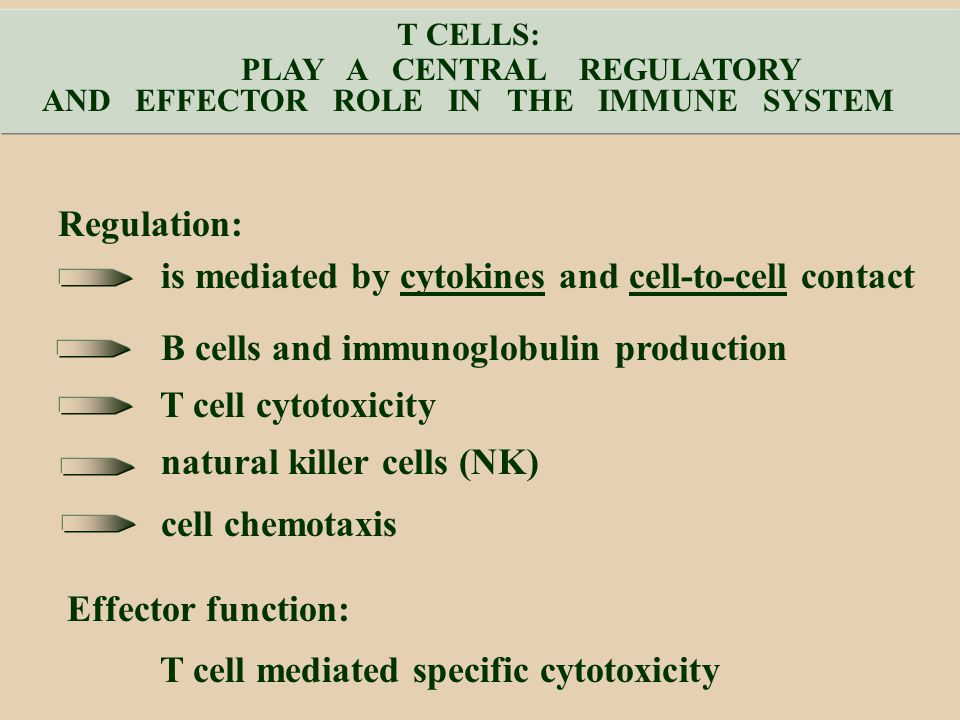 PLAY A CENTRAL REGULATORY AND EFFECTOR ROLE IN THE IMMUNE SYSTEM