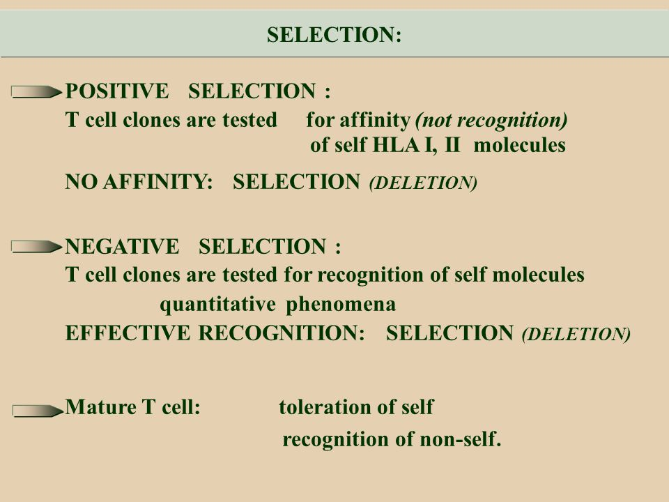 SELECTION: POSITIVE SELECTION : T cell clones are tested for affinity (not recognition) of self HLA I, II molecules.
