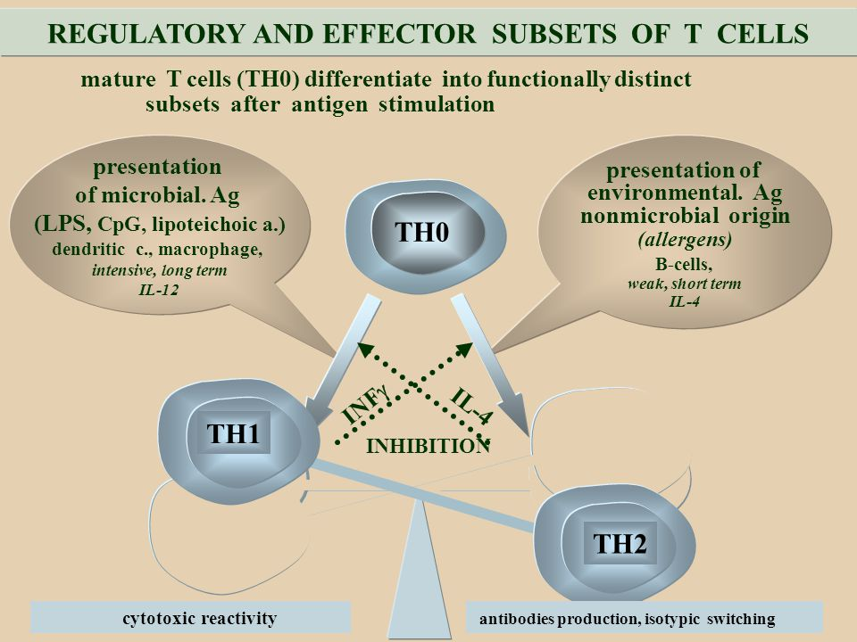 REGULATORY AND EFFECTOR SUBSETS OF T CELLS