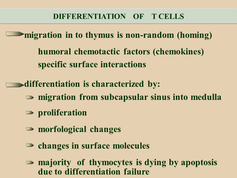 DIFFERENTIATION OF T CELLS