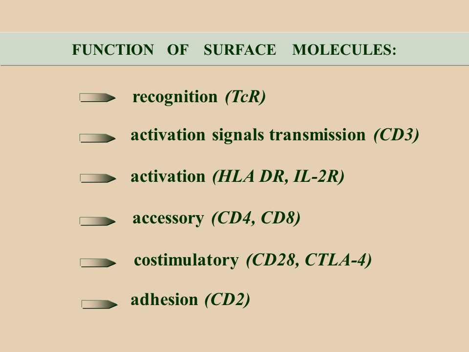 FUNCTION OF SURFACE MOLECULES: