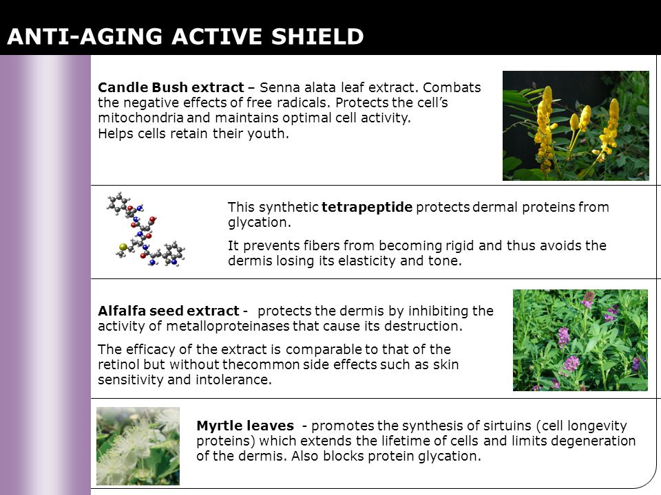 ANTI-AGING ACTIVE SHIELD